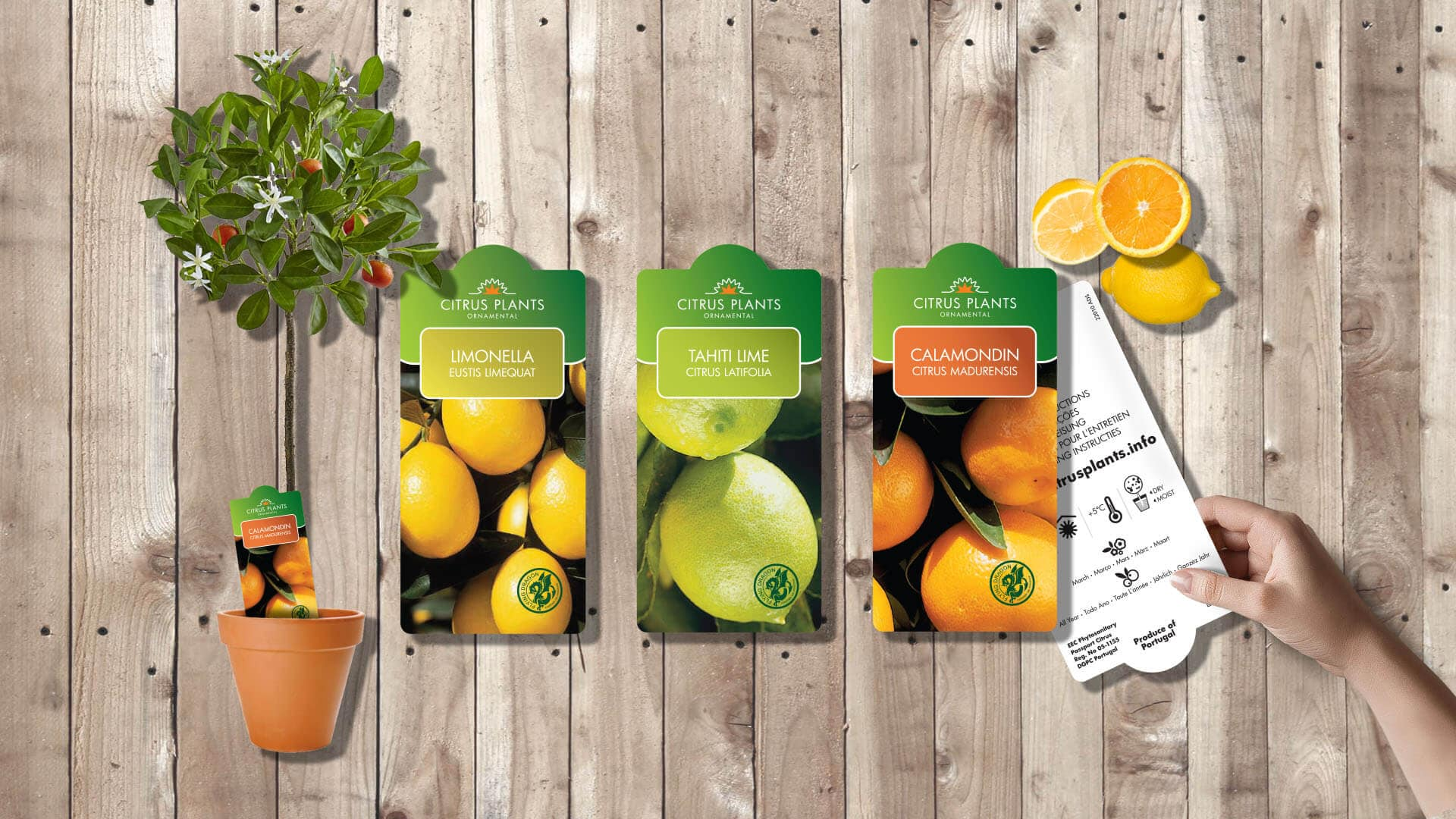 services-sale-packaging-gallery-hd-1920x1080_0000_citrus